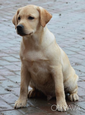 Счастье, это когда у тебя есть любовь и собака. Наступило сказочное время для по. Киев, Киевская область. фото 1