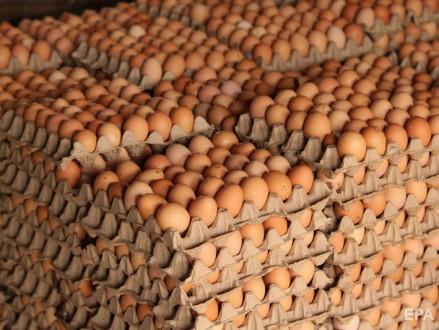 Инкубационное яйцо. Кропивницкий. фото 1