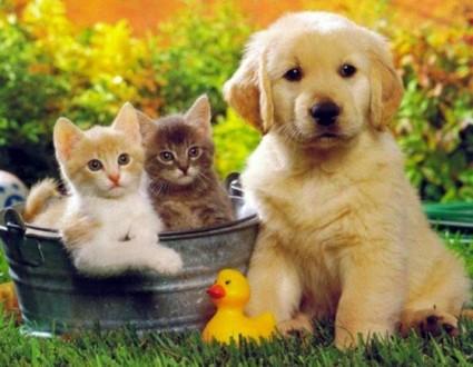 Ветеринарні препарати. Умань. фото 1