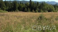 Продаж земельної ділянки в Карпатах (Кривопільський перевал). Верховина. фото 1
