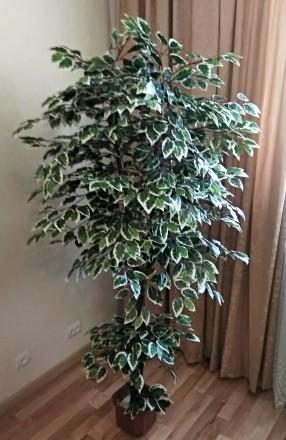 Любое помещение нужно украшать растениями. Но что делать, если просто нет времен. Хмельницкий, Хмельницкая область. фото 2