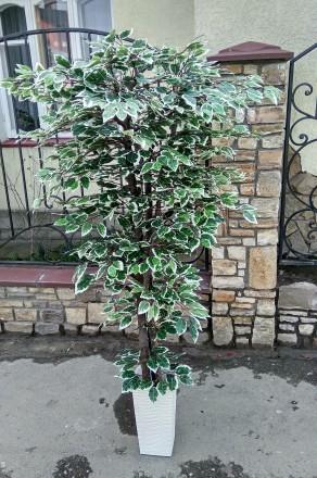 Любое помещение нужно украшать растениями. Но что делать, если просто нет времен. Хмельницкий, Хмельницкая область. фото 4
