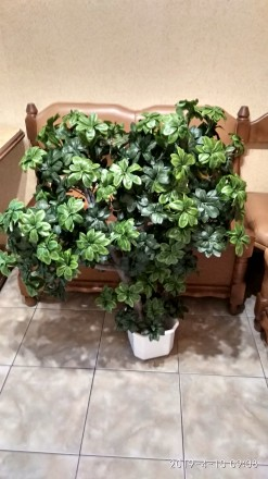 Любое помещение нужно украшать растениями. Но что делать, если просто нет времен. Хмельницкий, Хмельницкая область. фото 3