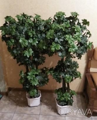 Любое помещение нужно украшать растениями. Но что делать, если просто нет времен. Хмельницкий, Хмельницкая область. фото 1
