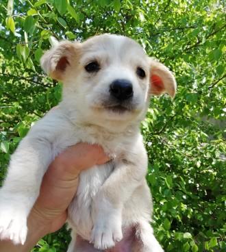 Отдам щенков в хорошие руки. Чернигов. фото 1