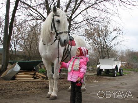 Любите лошадей? Хотите научиться ездить верхом? Наши инструктора помогут вам по. Киев, Киевская область. фото 1