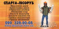 Обрезка деревьев, кронирование деревьев, удаление деревьев.. Київ. фото 1