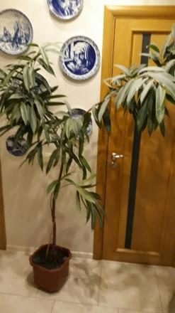 Комнатные растения. Киев. фото 1
