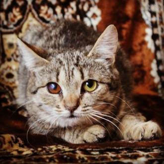 Унікальне кошеня у добрі руки (6-7міс.). Киев. фото 1