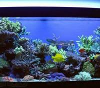 Изготовление, обслуживание и запуск морского аквариума. Київ. фото 1