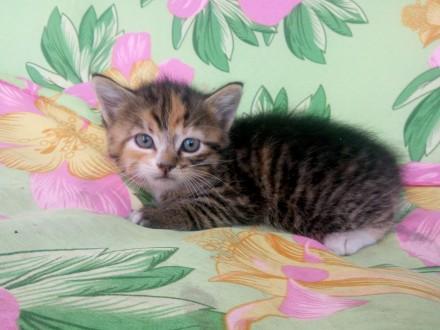 Отдам в хорошие руки котят. Чернигов. фото 1