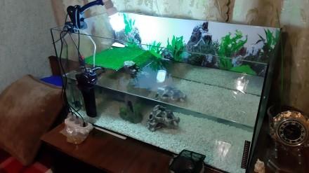 Черепашка з акваріумом. Львов. фото 1