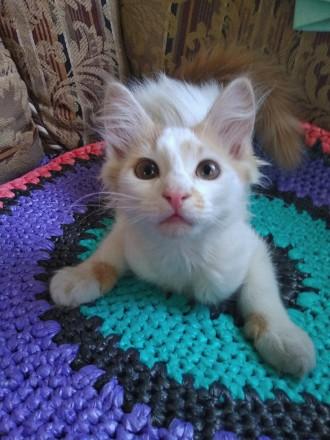 Котенок от ДОМАШНЕЙ кошки. Харьков. фото 1