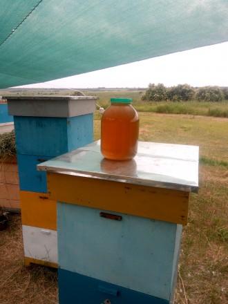 Продам мед з власної пасіки.. Лозовая. фото 1