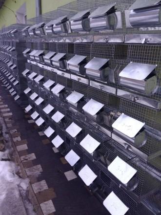 Клітки для шиншил. Тернополь. фото 1