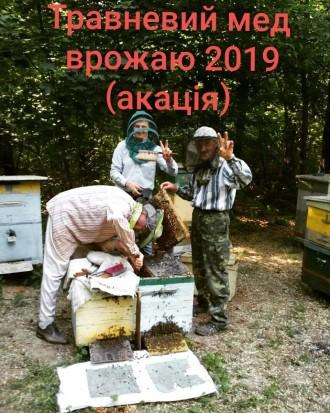 Травневий мед врожаю 2019. Чернигов. фото 1