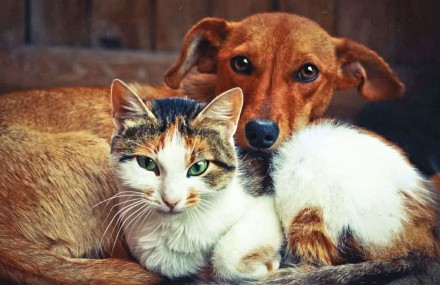 Ветеринар на дом. Киев. фото 1