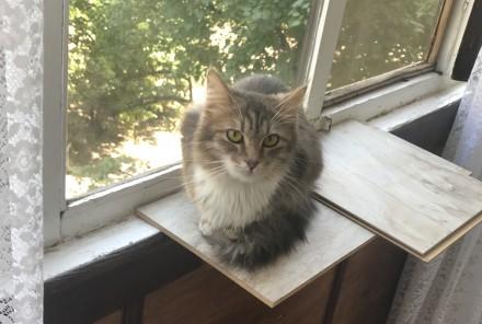 Кошечка трехцветка. Днепр. фото 1