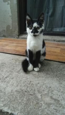 отдам  котенка 2,5 месяца.  мальчик. Одесса. фото 1