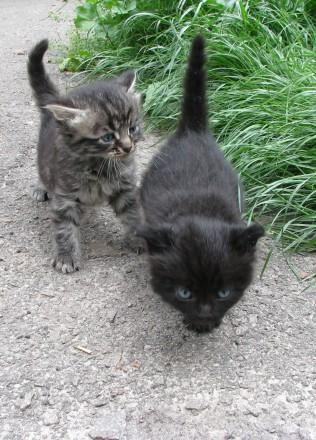 кошенята шукають дім. Прилуки. фото 1