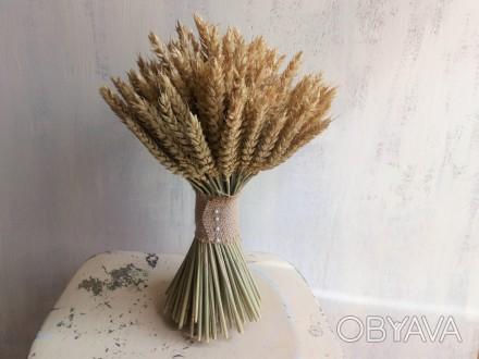 Колосья пшеницы сухоцветы декор свадебный букет пшеница безостая букет