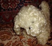 Продам собаку мягкую игрушку, в хорошем состоянии. 300 грн. Дніпро, Дніпропетровська область. фото 2