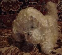Продам собаку мягкую игрушку, в хорошем состоянии. 300 грн. Дніпро, Дніпропетровська область. фото 4