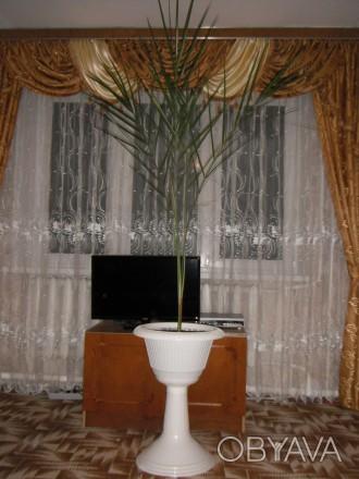 Финиковая пальма в горшочке на высокой ножке. Возраст 12 лет. Здоровая, хорошо р. Тальное, Черкасская область. фото 1