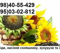 Продам насіння соняшника Бріо, Неома, Рокі, Мегасан (урожай 2015р). Харьков. фото 1
