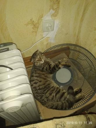 Котик вислоухий. Днепр. фото 1