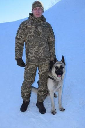 Продаются,крупные щенки Восточноевопейской овчарки от чистокровных родителей с я. Чернигов, Черниговская область. фото 6