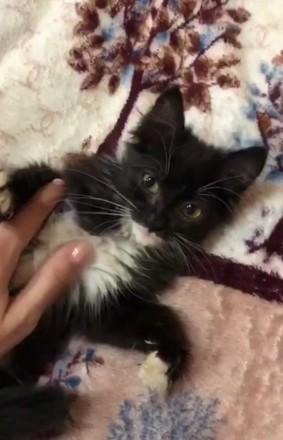 Отдам котёнка. Котёнок ищет дом.. Харьков. фото 1