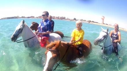Прогулки и купание в море на лошадях в Хургаде, Египет. Днепр. фото 1