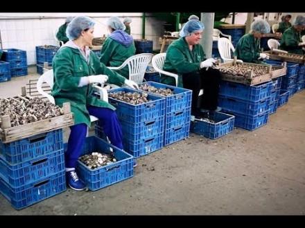 Разнорабочий / разнорабочая на овощную ферму. Запорожье. фото 1
