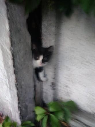 Отдам маленького выброшенного котенка в хорошие руки. Он ждёт дом, а пока живёт. Доброполье. фото 1