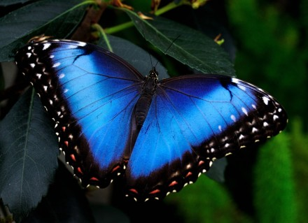 Живые тропические бабочки. Живые бабочки.Бабочки не дорого. Бабочка.. Днепр. фото 1