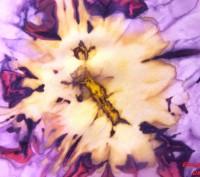 Воздушный изысканный длинный шарф из натурального шелка - эксельсиор. Выполнен с. Черкассы, Черкасская область. фото 5