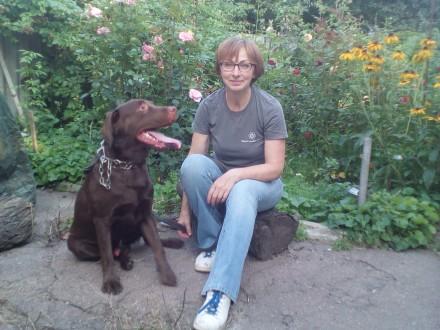 Перетримка передержка собак. Чернигов. фото 1