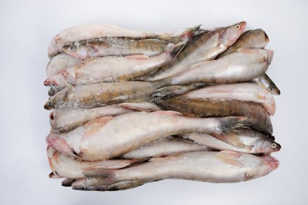 Рыба речная в ассортименте. Винница. фото 1