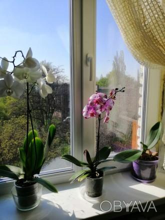 Пластиковые окна, двери, балконы по доступным ценам, фирмы Виконда, WDS, Steko. . Кривой Рог, Днепропетровская область. фото 1