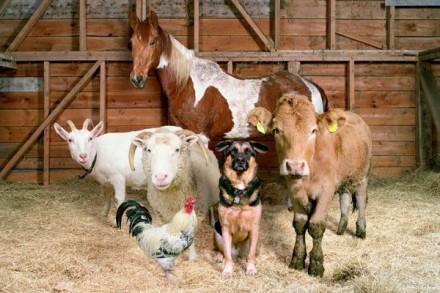 Передержка сельхоз животных. Николаев. фото 1