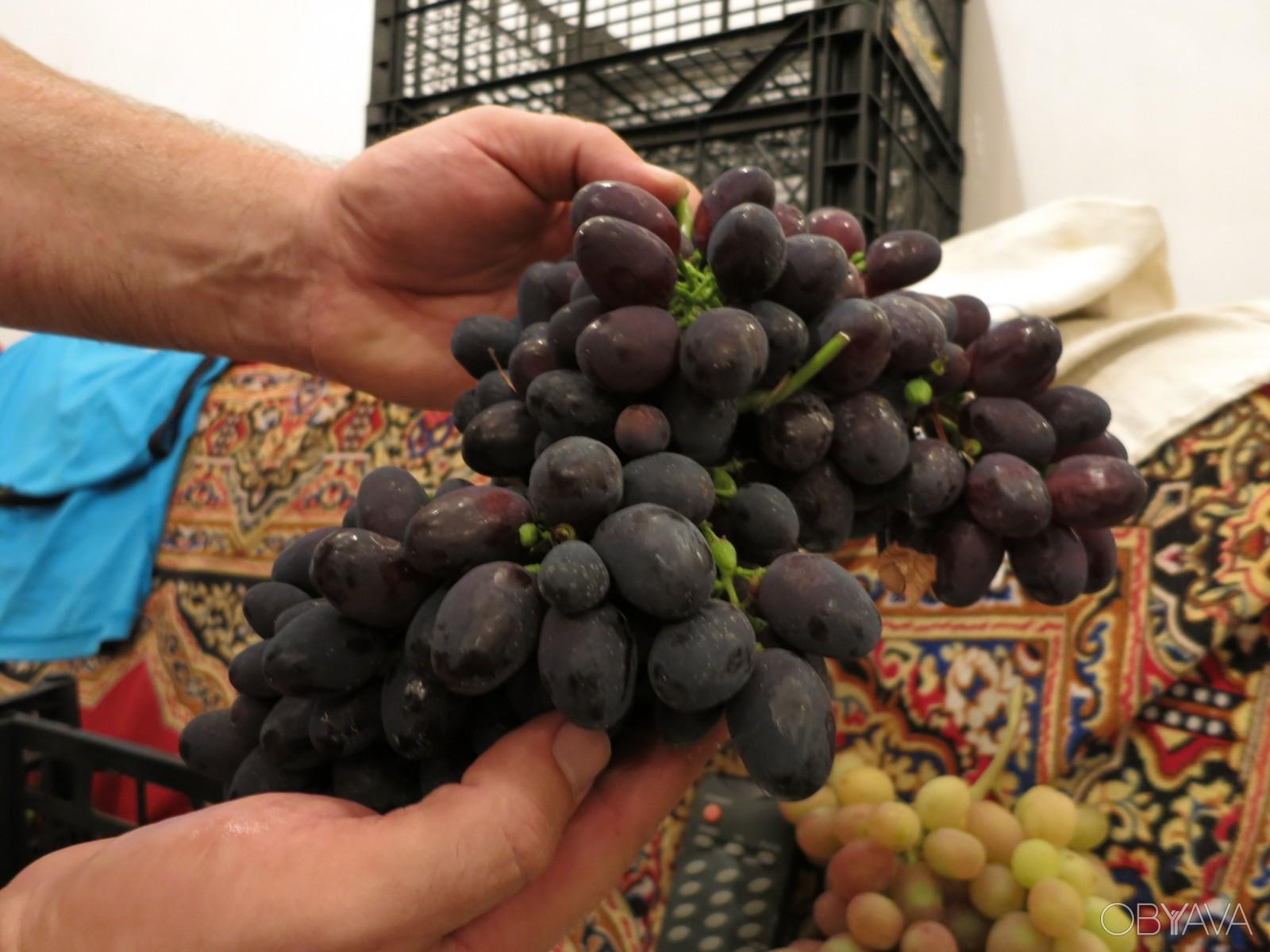 года виноград забава описание сорта фото свадьбе средневековом рыцарском