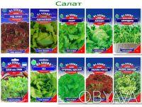 Семена пряновкусовые и зеленые культуры. Обухов. фото 1