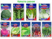 Семена капусты: белокочанной, краснокочанной, цветной, разновидности капусты.. Обухов. фото 1