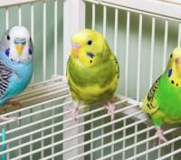 Передержка клеточных животных в домашних условиях. Чернигов. фото 1
