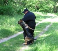 Дрессировка собак индивидуально и в группах. Киев. фото 1
