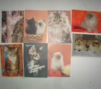 Карманные календарики Кошки . СССР. 8 штук. Житомир. фото 1