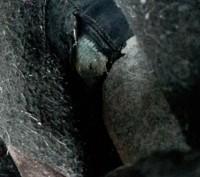 """Стильные сапоги """"Kapika"""",демисезон,р.34.В подарок краска для замша-флакон почти . Светловодск, Кировоградская область. фото 11"""