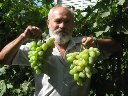 Живу  в  частном  доме, есть  виноградник , сад в  пригороде. Одесса, Одесская область. фото 4