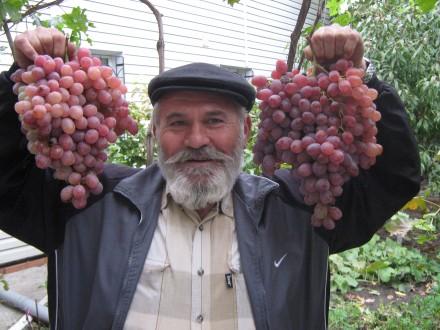 Живу  в  частном  доме, есть  виноградник , сад в  пригороде. Одесса, Одесская область. фото 2